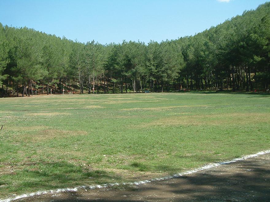 Kent Ormanı